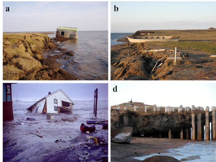 Figure 2. Permafrost coastal erosion, storm surge flooding, and coastal permafrost thaw impacts:  (a) coastal erosion results in the loss of a subsistence fishing cabin in 2005 (photo: Benjamin M. Jones) and (b) cultural sites along the Beaufort Sea coast in Alaska in 2007 (photo: Benjamin M. Jones); (c) housing and infrastructure at Utqiaġvik are lost during a storm surge in 1963 (photo source: NARL Archive); and (d) coastal erosion and permafrost degradation impacts a legacy oil exploration well head alon