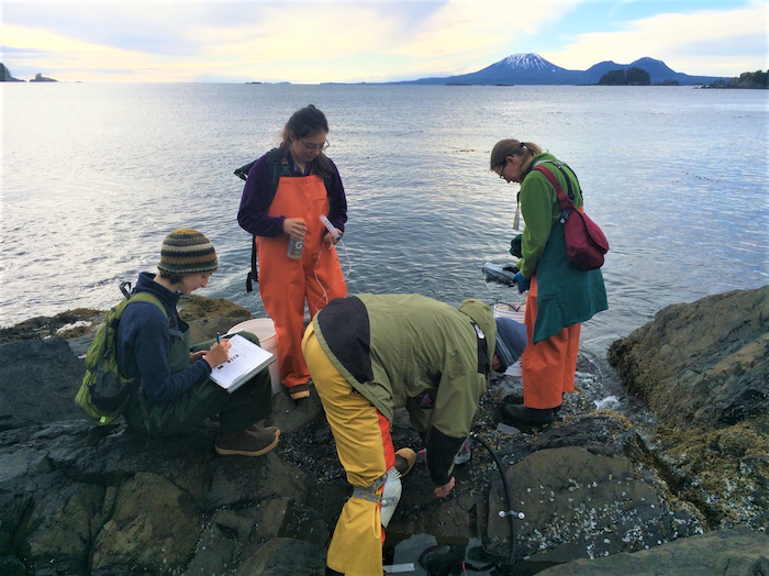 Researchers working on the Climate Change in the Intertidal project check salinity, temperature, pH, and dissolved oxygen of 20 tidepools during a monthly survey. Photo courtesy of the Sitka Sound Science Center.