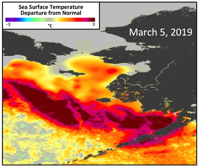 Figure 3. Sea surface temperature (SST) departure from normal (anomaly) on 5 March 2019, which is the date of the lowest sea ice coverage in the Bering Sea in March of 2019 (see Figure 1). The normal or average SST condition is defined over years 2003–2014. Image Source: Daily, 1km SST anomalies based on the GHRSST Multiscale Ultrahigh Resolution SST dataset, accessed from the PO.DAAC at the NASA Jet Propulsion Laboratory.