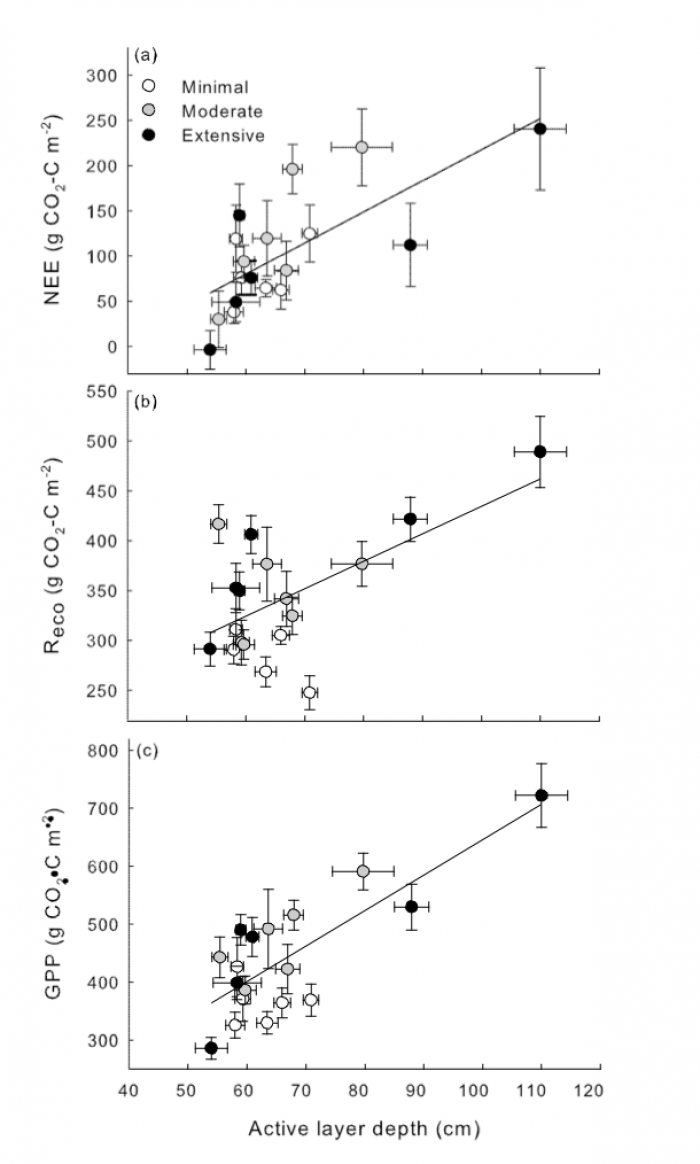 Figure 3. Effects of thaw (increased active layer thickness) on growing season net ecosystem carbon exchange (NEE) at the Permafrost Thaw Gradient. Positive NEE shows that plant carbon uptake responds to permafrost thaw more strongly than respiration carbon losses and the ecosystem is storing atmospheric carbon in the summer. However, in winter when plants are dormant but soil microbial processes continue, carbon losses offset summer gains such that the ecosystem appears to lose carbon when accounting for th