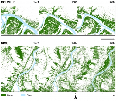 Results also show a strong association of floodplain shrub development with high topographic wetness and a decreasing average distance between shrubs and the riverbank, which suggests an interacting influence of substrate removal and stabilization as a consequence of increased vegetation cover. Image courtesy of Adam Naito.