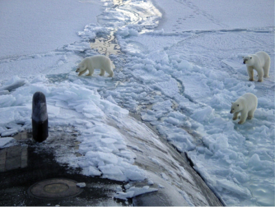 Figure 1: Polar bears investigate a U.S. Navy submarine that has just emerged through a lead in the Arctic sea ice. Image courtesy of U.S. Navy Arctic Submarine Laboratory.