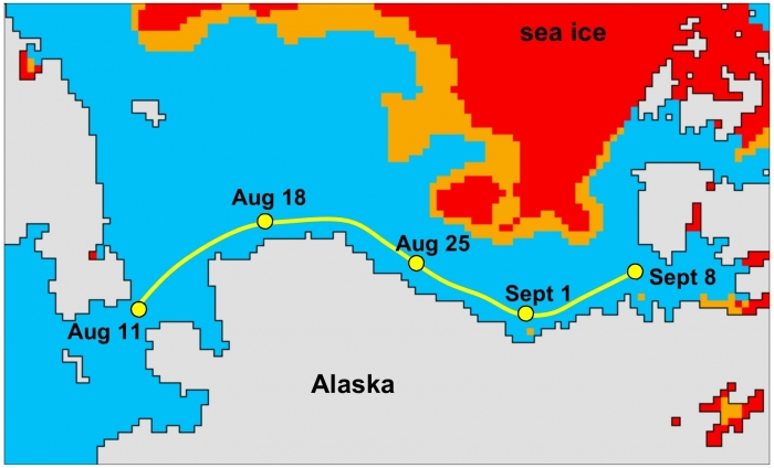Figure 2: Cook's hypothetical progress along the coast of Alaska and northern Canada under sea-ice conditions of 2002 or later. The sea-ice coverage is shown for 18 August 2011, with red indicating dense pack ice, orange loose ice, and blue open water. Cook would have had plenty of time to return to the Bering Strait from the position of Sept 8: the coastal waters east of Point Barrow do not freeze up until late October nowadays. (Sea-ice data are from the National Snow and Ice Data Center in Boulder, CO).