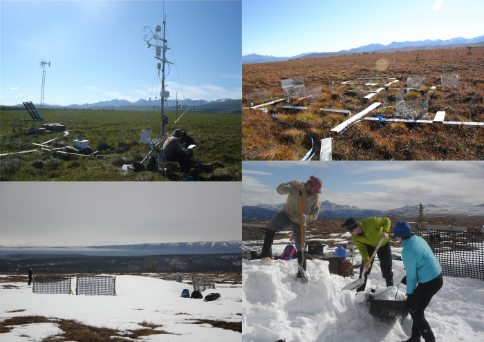 Figure 2. Clockwise from top left: A) Eddy covariance tower measuring landscape carbon dioxide and methane fluxes at the Permafrost Thaw Gradient; B) CiPEHR and DryPEHR with carbon dioxide flux chambers and air warming chambers during the growing season; C) CiPEHR in winter with snow fence and drifted snow passively warming soils and thawing permafrost; D) snow removal occurs in spring to maintain constant water inputs and constant spring melt date between warming and control plots. Images courtesy of Maurt