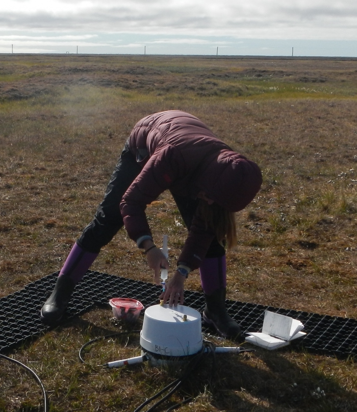 Lydia Smith collects gas samples to measure 13C of ecosystem respiration. Photo courtesy of Oriana Chafe.