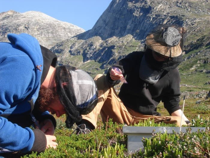 Figure 4: Field work in the Nuuk area, Greenland. Researchers perform detailed vegetation analyses. Images courtesy of Magnus Kramshøj.