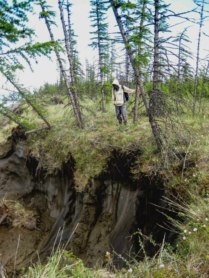 WHRC scientist Max Holmes peers over the edge of a bluff of permafrost – dense stores of soil carbon which contain high volumes of carbon. Photo courtesy of Sue Natali.