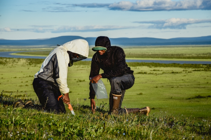 WHRC students of the Polaris program cut soil from the tundra's surface for sampling. Photo: John Schade