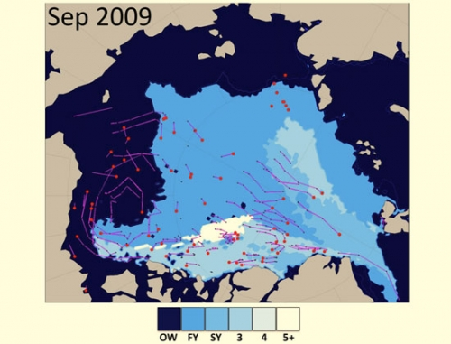 Sea ice age for September 2009 and buoy drift as contributed by I. Rigor.