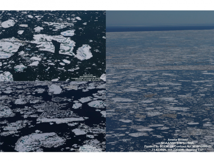 Figure 9: Mosaic of aerial photographs of Chukchi Sea ice conditions northwest of Barrow, Alaska on 21 July 2016. Photo inserts on the left show details of ice at an advanced stage of melt with melt ponds penetrating through ice cover (bottom left) and remnants of deformed, thicker ice (top left). (Photos courtesy of NOAA Aerial Surveys of Arctic Marine Mammals program)