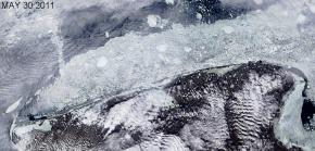 30 May 2011 Satellite image shows rotting ice near Shishmaref