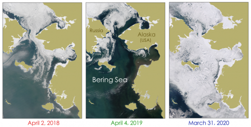 Figure 3. Sea ice in the Bering Sea during mostly cloud-free days in late-March to early April in 2018, 2019, and 2020 (left to right) observed using MODIS satellite imagery. (Source: Imagery obtained from NASA Worldview)