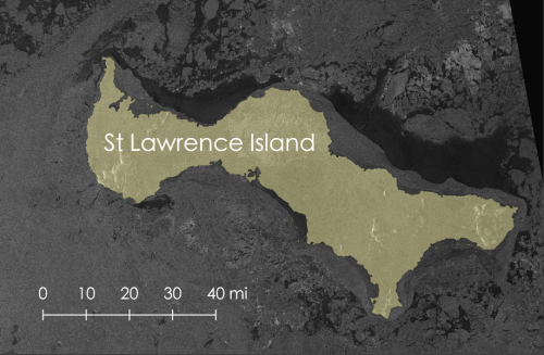 Figure 5. Sea ice around St Lawrence Island on 2 April 2020 observed using SAR satellite imagery. (Source: Sentinel-1 imagery obtained from the Alaska Satellite Facility)