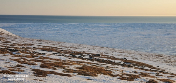 Nearshore ice conditions near Wales - view 1.