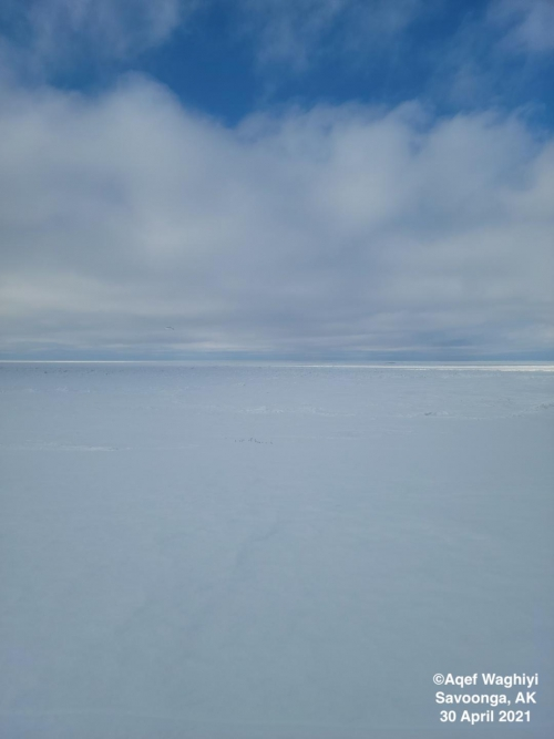 Sea ice and weather conditions in Savoonga - view 3.