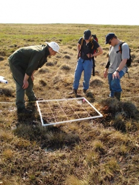 Paul Grogan (at left), an ecologist from Queens University, collaborates with Darwyn Coxson on an IPY project called Climate Change Impacts on Canadian Arctic Tundra Ecosystems: Interdisciplinary and Multi-scale Assessments. In this picture, Grogan and students from UNBC and Queens University make plot based assessments of nitrogen fixing plants near Daring Lake. The site is located about 300 miles northeast of Yellowknife in the Northwest Territories. Photo by Darwyn Coxson.