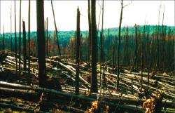 Immediate aftermath of the Rosie Creek Fire, June 1983.