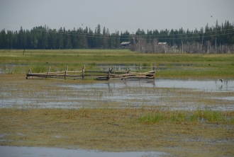 Increased precipitation and warming permafrost render hayfields unuseable