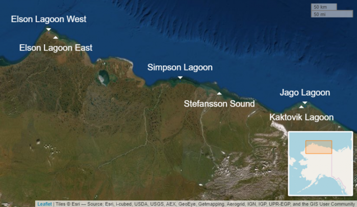 Figure 2: Lagoon systems covered by Beaufort Lagoon Ecosystems Long-Term Ecological Research (BLE LTER) Program extend across the northern Alaska coast  from Pt. Barrow in the west to the Jago River delta in the east. Image courtesy of BLE LTER.