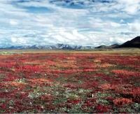 Arctic terrestrial ecosystem