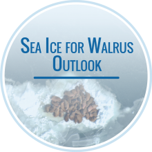Sea Ice for Walrus Outlook Season Begins