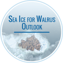 Sea Ice for Walrus Outlook
