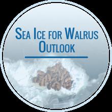 Sea Ice for Walrus Outlook Season Begins