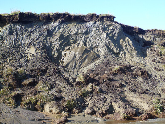 Figure 4. Ice-rich permafrost deposits exposed along the northern shoreline of Teshekpuk Lake. Current studies are focused on quantifying lake expansion rates, permafrost degradation, and lake drainage. Image courtesy of Benjamin M. Jones.