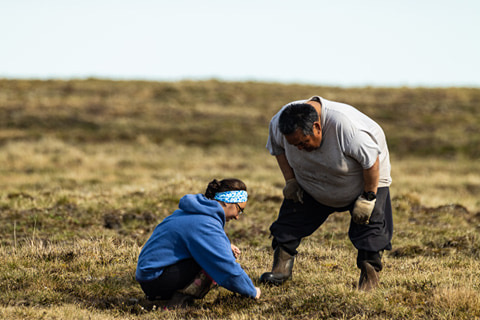 Figure 1. Kimberly Kivvaq Pikok and her father, Lloyd Pikok Sr. study vegetation on the Arctic tundra near the cabin at Pikok Camp on the North Slope of Alaska. Kimberly was telling her dad about Labrador Tea and Heather. Photo courtesy of Lloyd Pikok Jr.